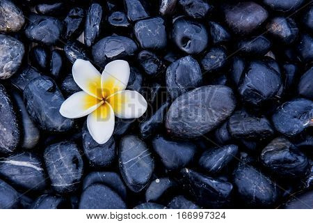 flower on stone background, spa and massage