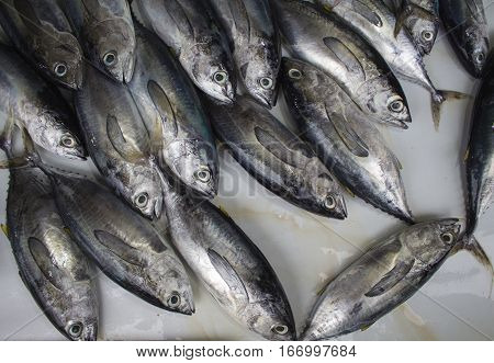 Fresh tropical fishes on the market. Grey and silver sea fishes bunch. Fresh fisherman catch for dinner. Fish for cooking. Red mackerel ingredient. Closeup fish meat