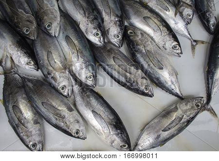 Fresh tropical fishes on the market. Grey and silver sea fishes bunch. Fish pile on table for sell. Fresh fisherman catch for lunch. Fish for cooking. Red mackerel ingredient. Closeup fish meat