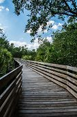 A LONG WOODEN WALKWAY BORDERED BY PALM TREES WITH AN OAK TREE LIMB FRAMS AND A BLUE CLOUDY SKY poster