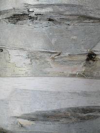 Birch Bark Background