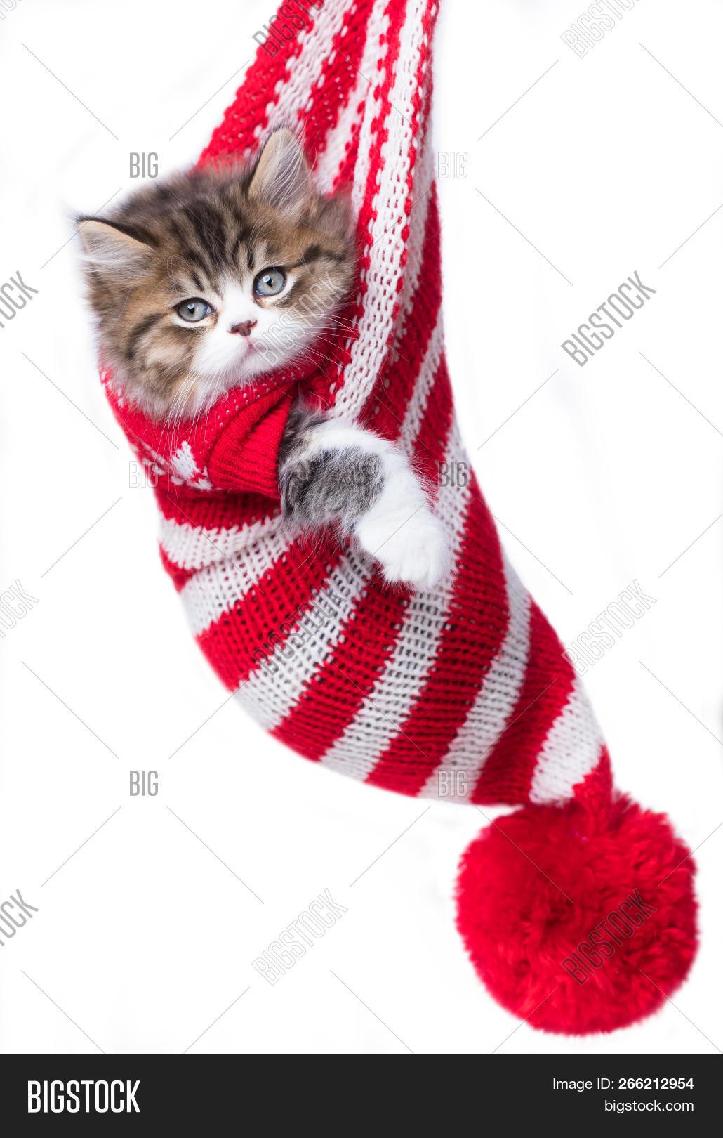 Kitten Wearing Image & Photo (Free Trial) | Bigstock