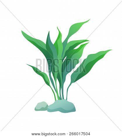 Green Marine Or Decorative Aquarium Algae Or Seaweed With Wide Large Leave On Stone. Color Cartoon V
