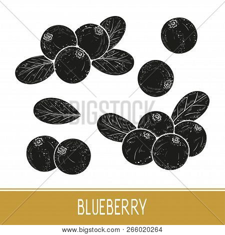 Blueberry. Berries, Leaves. Set. Black Silhouette On White Background.