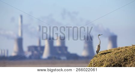 Landscape With A Grey Heron And A Power Station With Pollution In The Background