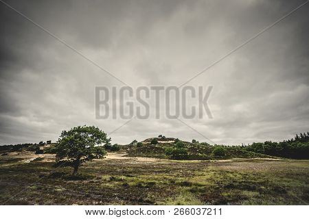 Lonely Tree On A Prairie In Cloudy Weather With Hills In The Background