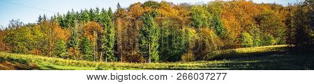 Autumn Scene Of A Forest In Glorious Golden Colors In The Fall In Panorama