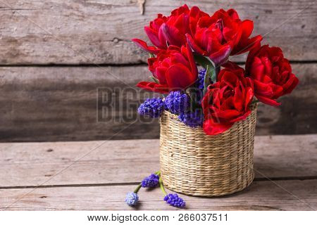 Red  Bright Tulips And Blue Muscaries Flowers On  Aged Textured  Background. Floral Still Life.  Sel