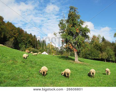 Swiss autumn scenery poster