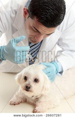 Vet Inserting A Needle Syringe Into Pet