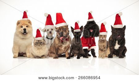 group of eight adorable santa cats and dogs with costumes sitting and standing on white background