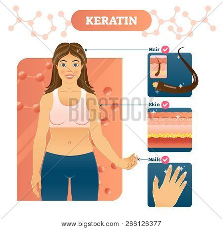 Keratin Vector Illustration. Hair, Skin And Nails Examples On Woman Body. Fibrous Structural Protein