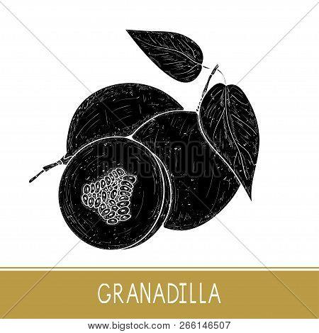 Granadilla. Fruit, Leaves. Black Silhouette On White Background.