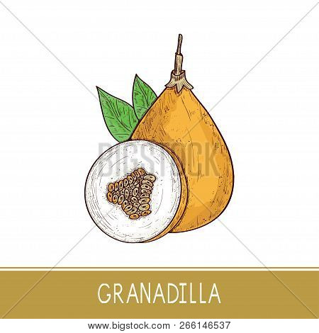 Granadilla. Fruit, Leaves. Sketch. On A White Background. Color.