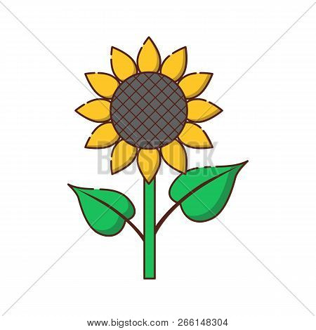 Vector Illustration With Cartoon Flat Yellow Sunflower Icon Isolated On Background. Nature Garden Fl