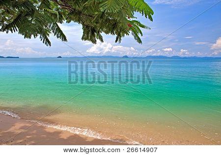 Tree frame under sea