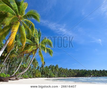 Palm trees on the beach