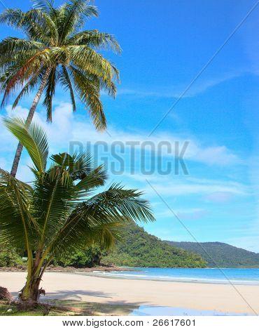 Palms, snad, sky and sea