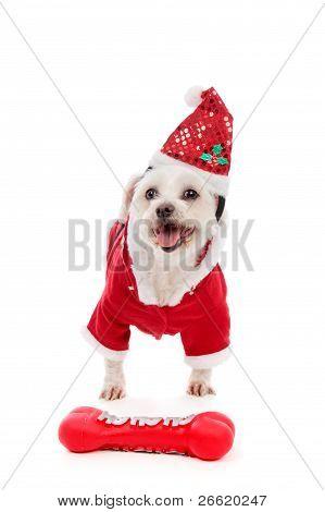 Dog Wearing Santa Claus Costume
