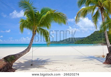 Beautiful green palm trees at tropical beach