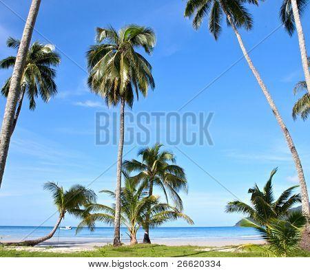 summer sea beach with palm tree