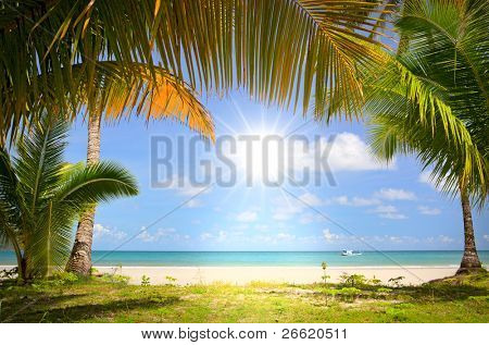 Sun in blue sky and palm trees gateway to white sand beach