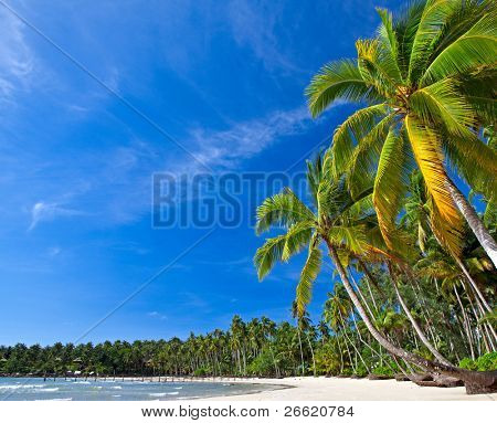 Summer nature view with palm trees on the beach near the sea under blue sky.