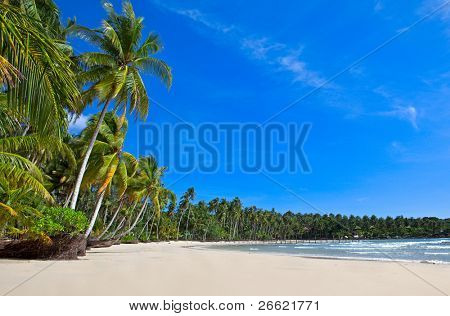 Tropical summer nature scene with palm trees on white sand beach
