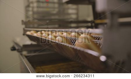 Industrial Production Of Donuts. Scene. The Bakery Bread Industry, Candy Factory, Cookies And Bagels