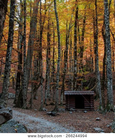 The Autumn In The Ordesa Valley (ordesa National Park - Monte Perdido)