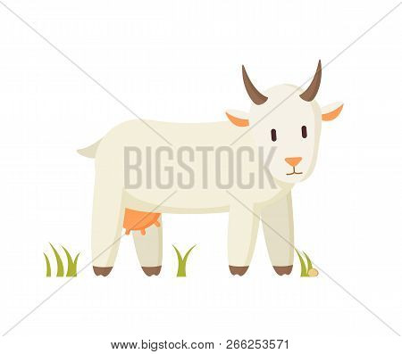 Goat Smiling Cartoon Character On Grass Isolated. Creamy Nanny Farm Animal Standing On Grass And Loo