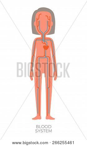 Blood System Of Human Heart And Veins Poster With Headline, Persons Internal Organ Containing Bloods