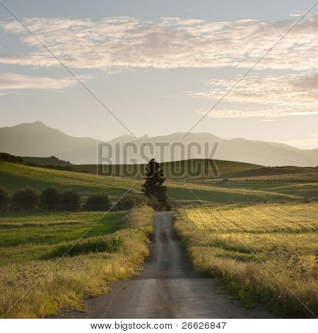 rural road crosses yellows fields with solitary tree at the twilight, in background layered hills of the outback of Sicily