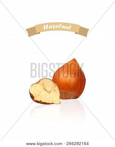 Hazelnuts. Photo-realistic Vector Illustration. Fresh Organic Filbert Isolated On White Background.