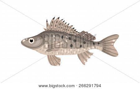 Ruffe fish with spiny fins. Predatory marine animal. Sea creature. Underwater life theme. Flat vector design poster