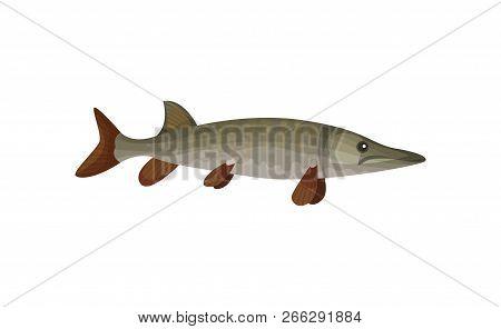 Flat Vector Icon Of Large Barracuda Fish. Predatory Tropical Fish. Sea Animal. Marine Biology. Under
