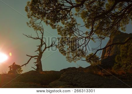 Summer Trees At Sunset In The Mountains