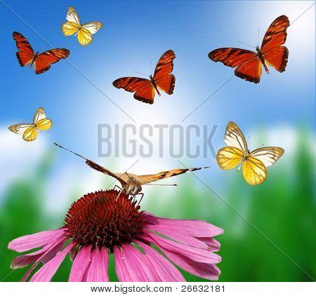 Butterflies on blur background poster