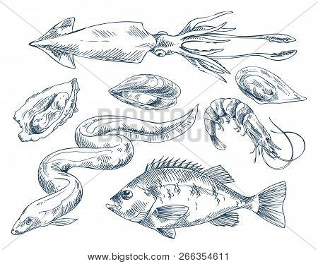 Edible Shellfish Oyster And Mussel, Squid And Eel Delicacy, Shrimp And Common European Perch Icon Se