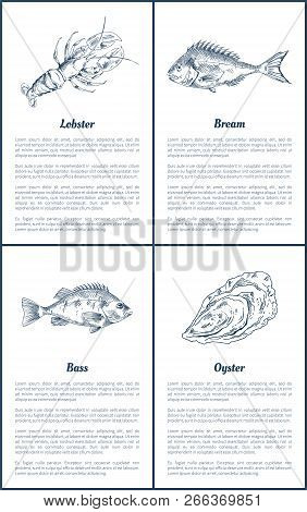 Lobster And Bream Bass Fish Posters Set. Marine Life Ingredients Of Luxury Dishes. Oysters Crustacea
