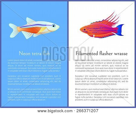 Filamented Flasher Wrasse And Neon Tetra Fish. Freshwater Aquarium Fish Icons On Blue And White Colo