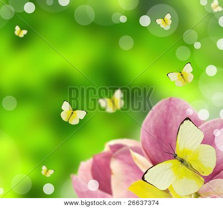 Blossoms of magnolia with butterflies and blur green background poster