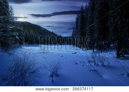Winter Forest In Mountains At Night In Full Moon Light. Tall Spruce Trees Around The Snow Covered Me