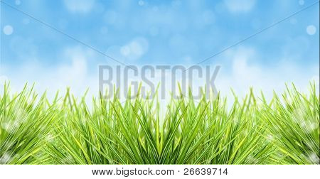 Fresh grass with blurred blue sky