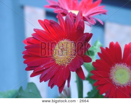 Red Flower With Pollen