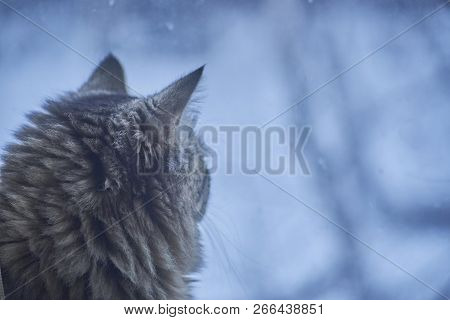 The Cat Is Sitting By The Window. A Cat Sits On A Rug At The Window In Winter. Fluffy Cat Looking Ou