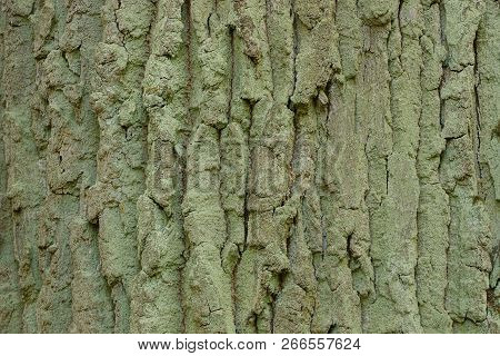Gray Green Wooden Texture From Dry Oak Bark