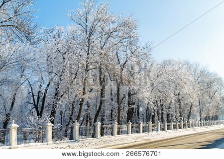 Trees In The Frost In The City Park. Winter In Town.