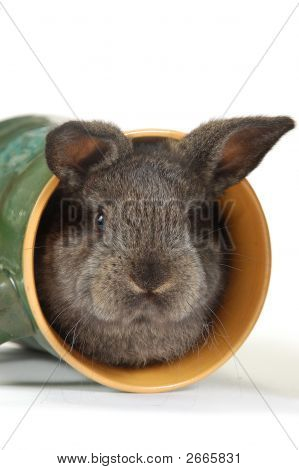Small Grey Rabbit Into The Cup