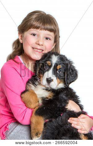 Young Girl Hug A Bernese Mountain Dog Puppy